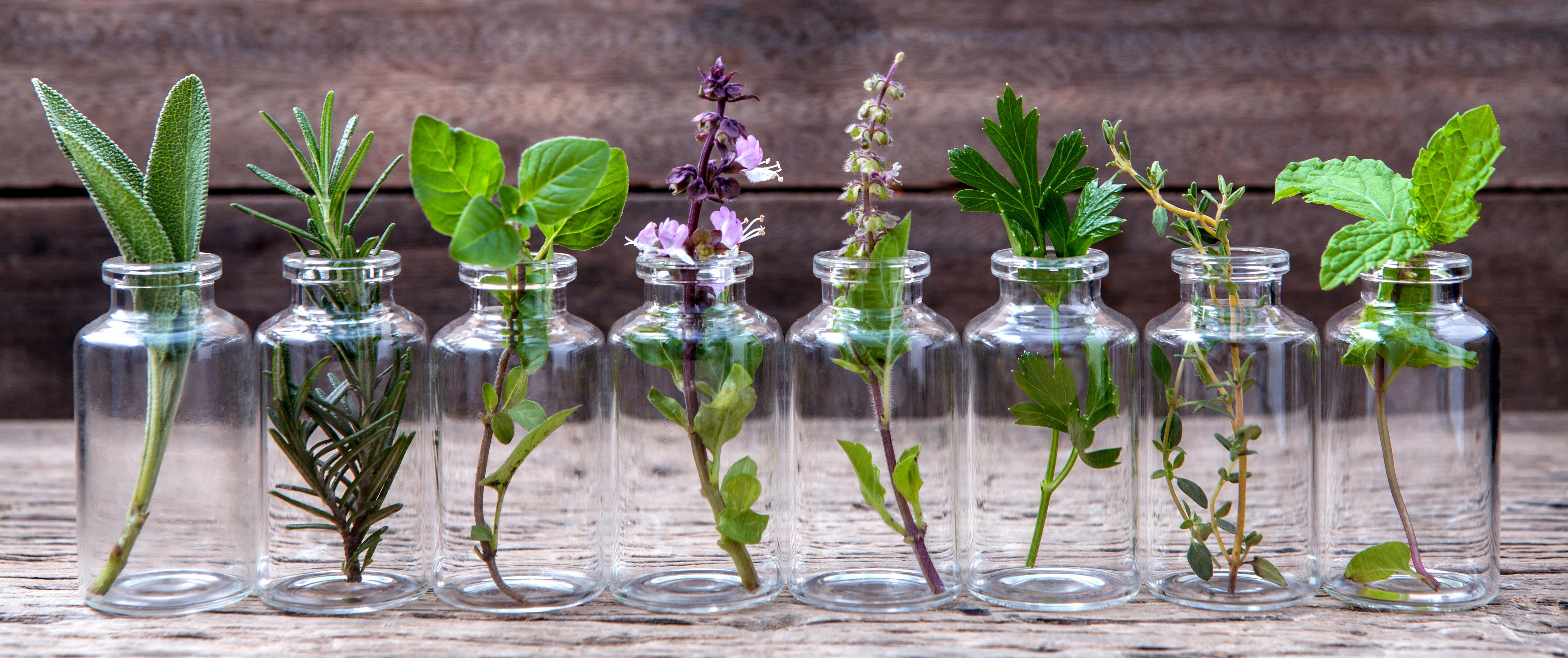 Naturopathie et Santé Naturelle